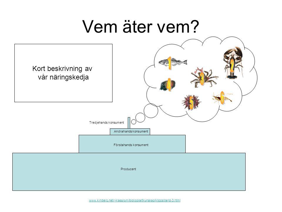 Vem äter vem? Tredjehands konsument Andrahands konsument Förstahands konsument Producent www.kinberg.net/~klassrum/biologi/artkunskap/klippstrand-3.ht