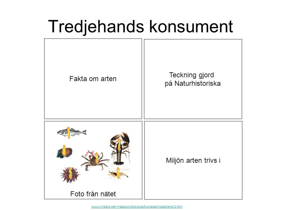 Foto från nätet Tredjehands konsument Teckning gjord på Naturhistoriska Miljön arten trivs i Fakta om arten www.kinberg.net/~klassrum/biologi/artkunsk
