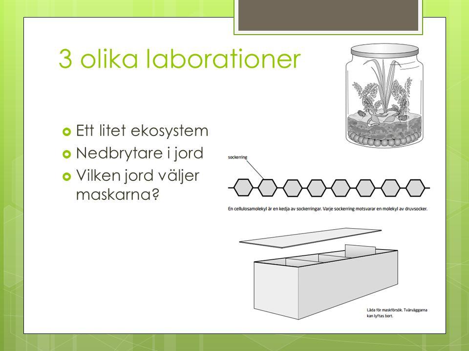 3 olika laborationer  Ett litet ekosystem  Nedbrytare i jord  Vilken jord väljer maskarna?