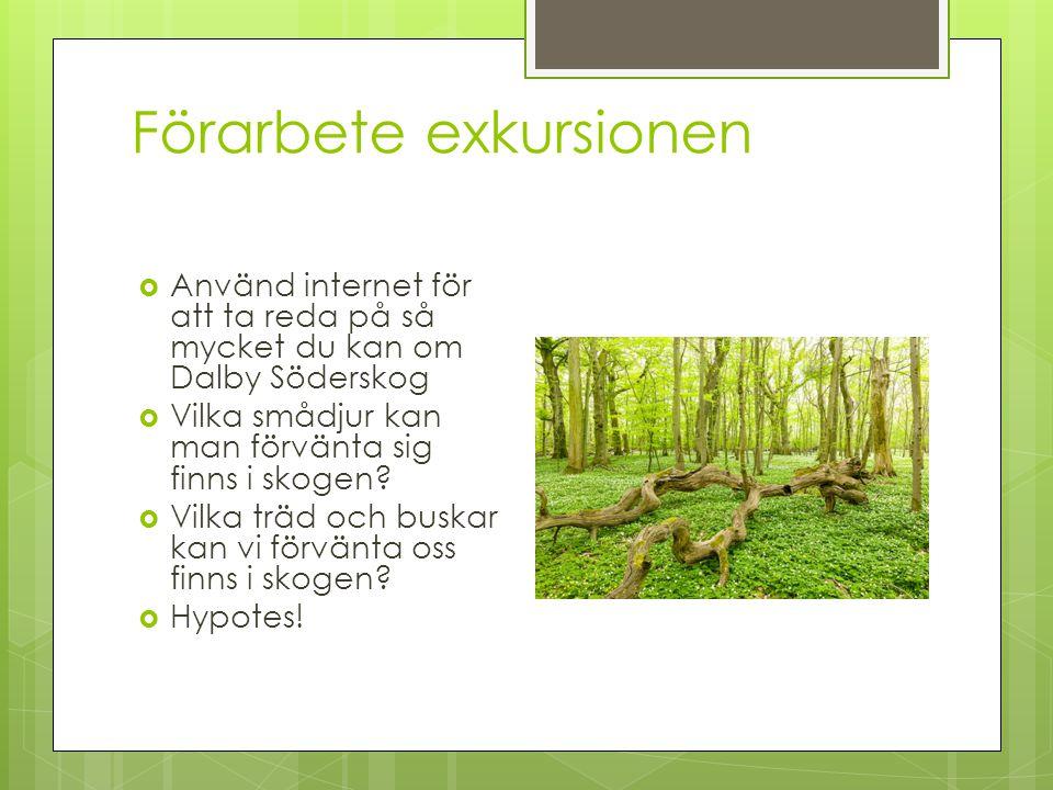 Förarbete exkursionen  Använd internet för att ta reda på så mycket du kan om Dalby Söderskog  Vilka smådjur kan man förvänta sig finns i skogen? 