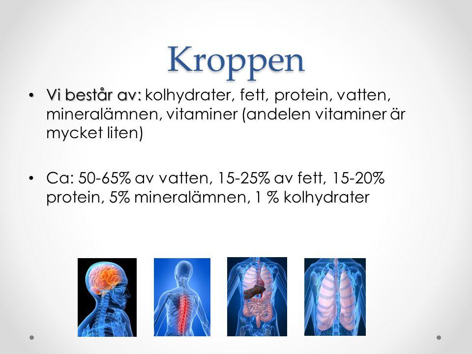 Kroppen Vi består av: Vi består av: kolhydrater, fett, protein, vatten, mineralämnen, vitaminer (andelen vitaminer är mycket liten) Ca: 50-65% av vatten, 15-25% av fett, 15-20% protein, 5% mineralämnen, 1 % kolhydrater