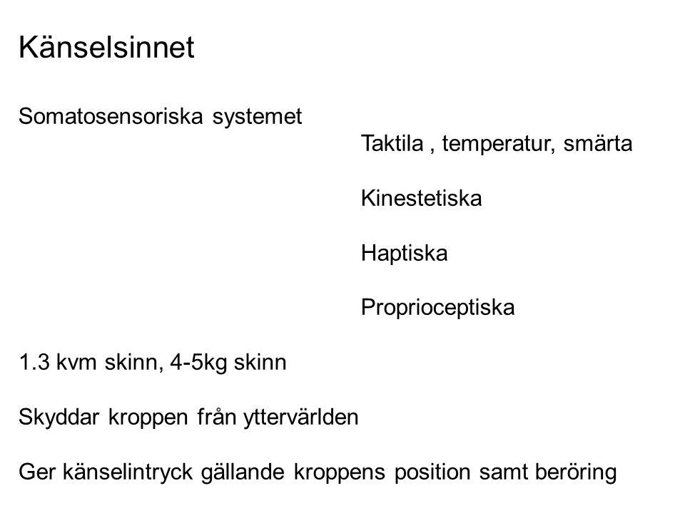Känselsinnet Somatosensoriska systemet Taktila, temperatur, smärta Kinestetiska Haptiska Proprioceptiska 1.3 kvm skinn, 4-5kg skinn Skyddar kroppen fr