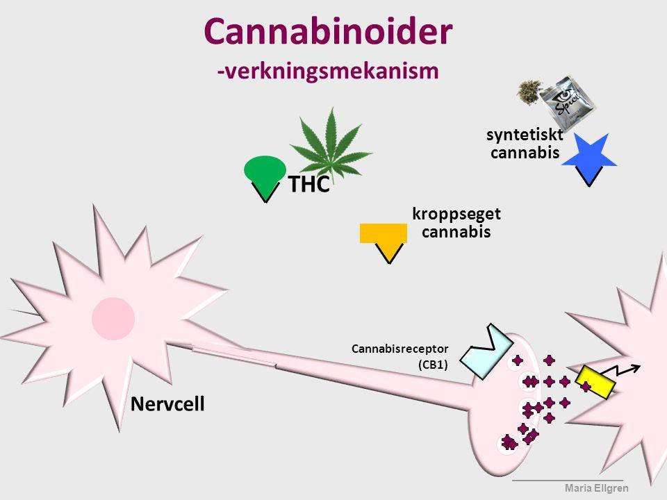 Cannabisreceptor (CB1) ____________________ Maria Ellgren kroppseget cannabis Nervcell Cannabinoider -verkningsmekanism THC syntetiskt cannabis