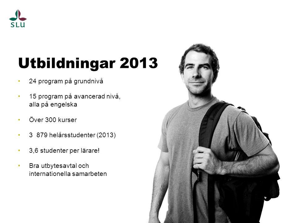 24 program på grundnivå 15 program på avancerad nivå, alla på engelska Över 300 kurser 3 879 helårsstudenter (2013) 3,6 studenter per lärare! Bra utby