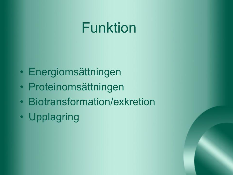 Funktion Energiomsättningen Proteinomsättningen Biotransformation/exkretion Upplagring