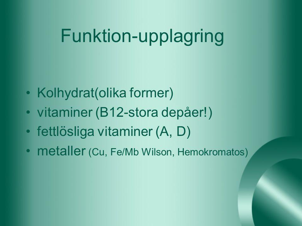 Funktion-upplagring Kolhydrat(olika former) vitaminer (B12-stora depåer!) fettlösliga vitaminer (A, D) metaller (Cu, Fe/Mb Wilson, Hemokromatos)