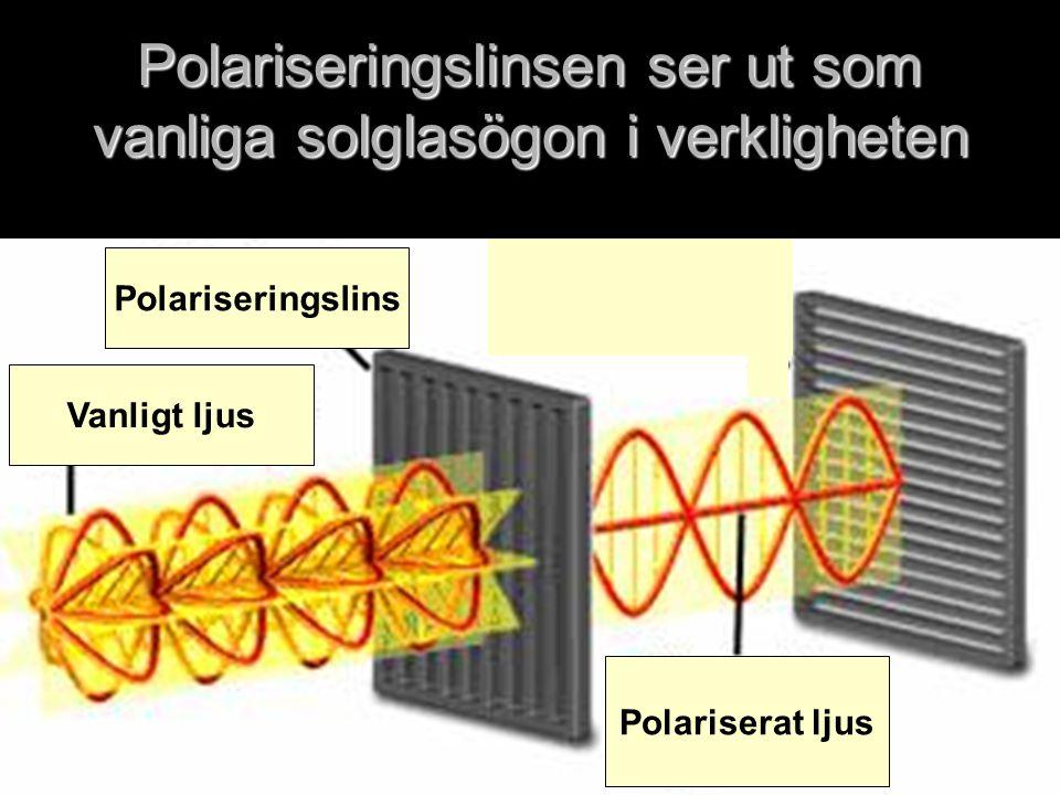 Polariseringslinsen ser ut som vanliga solglasögon i verkligheten Vanligt ljus Polariseringslins Polariserat ljus
