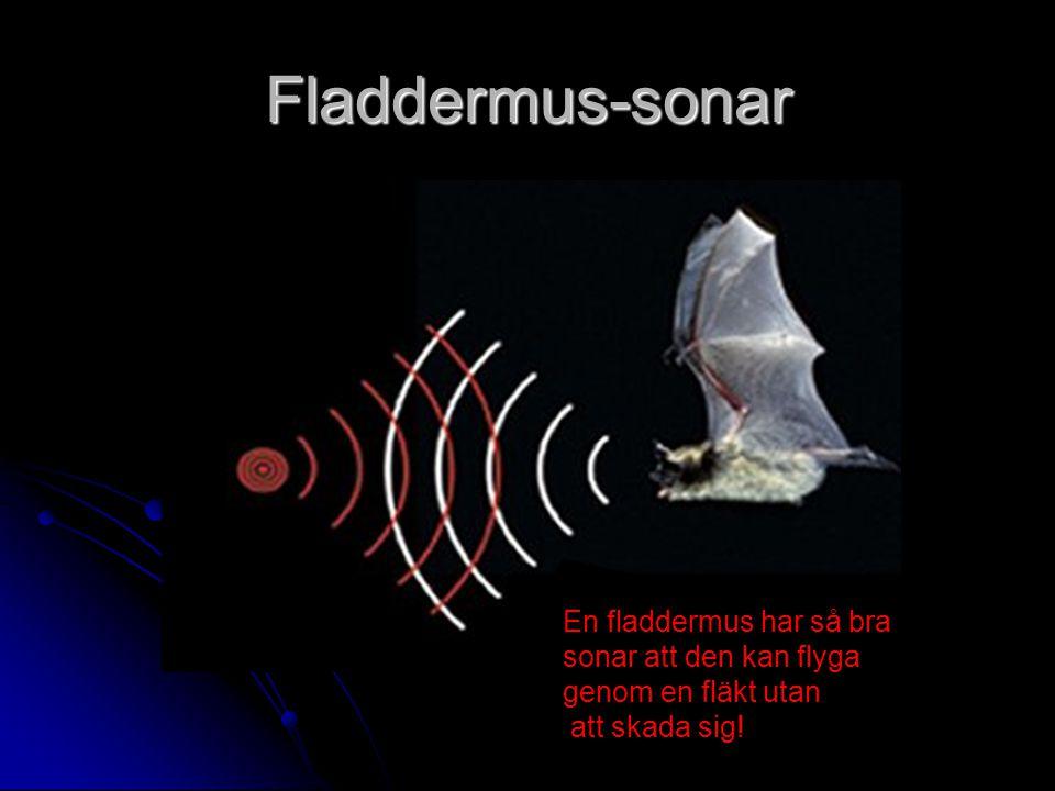 Fladdermus-sonar En fladdermus har så bra sonar att den kan flyga genom en fläkt utan att skada sig!
