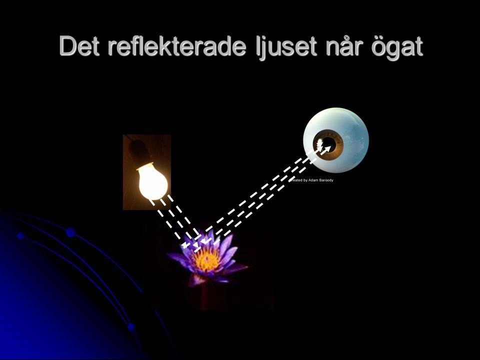 Det reflekterade ljuset når ögat