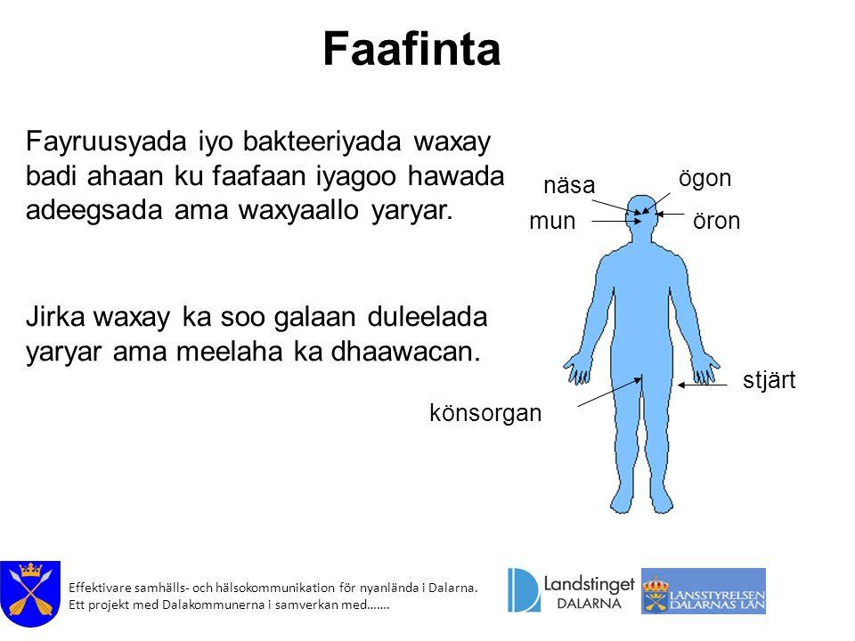 Effektivare samhälls- och hälsokommunikation för nyanlända i Dalarna. Ett projekt med Dalakommunerna i samverkan med……. ögon öronmun könsorgan stjärt