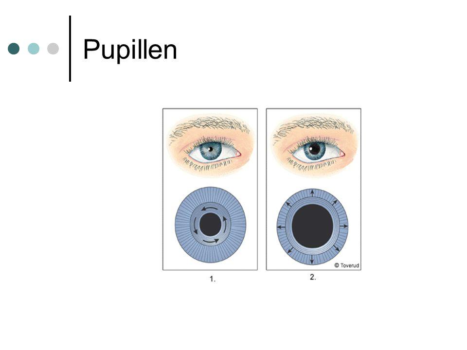 Synsinnesceller Tappar reagerar på färg Stavar reagerar på svart-vitt