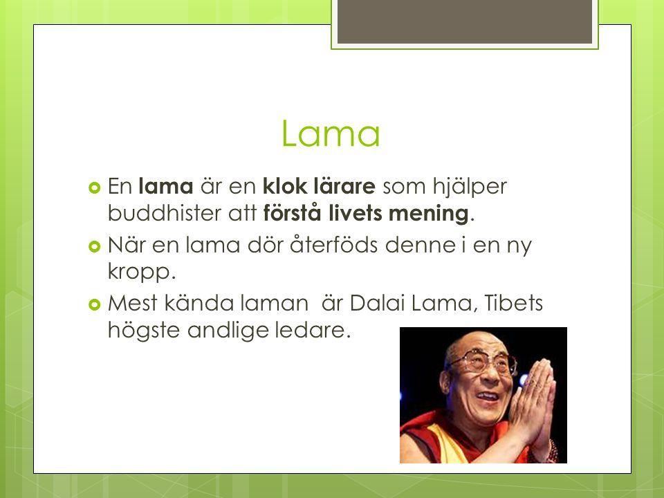 Lama  En lama är en klok lärare som hjälper buddhister att förstå livets mening.