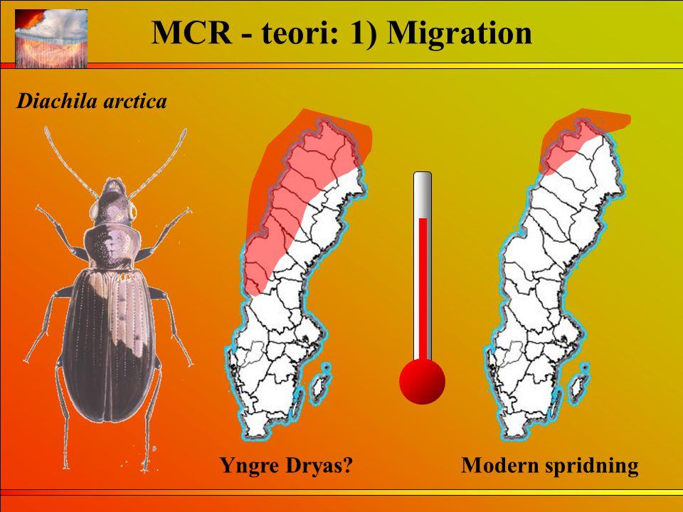 MCR - teori: 1) Migration Diachila arctica Modern spridningYngre Dryas?