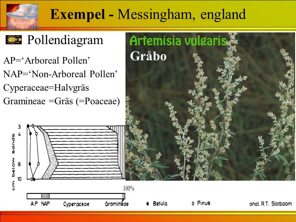 Pollendiagram Exempel - Messingham, england AP='Arboreal Pollen' NAP='Non-Arboreal Pollen' Cyperaceae=Halvgräs Gramineae =Gräs (=Poaceae) Gråbo