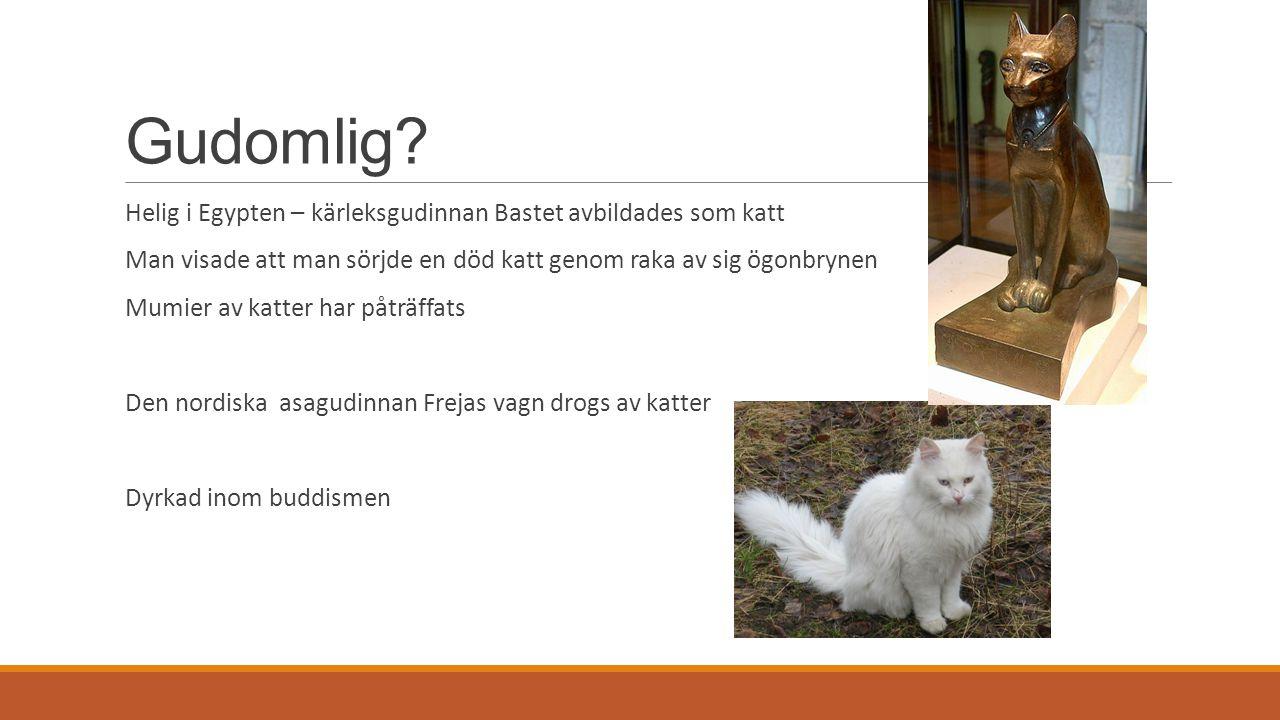 Gudomlig? Helig i Egypten – kärleksgudinnan Bastet avbildades som katt Man visade att man sörjde en död katt genom raka av sig ögonbrynen Mumier av ka