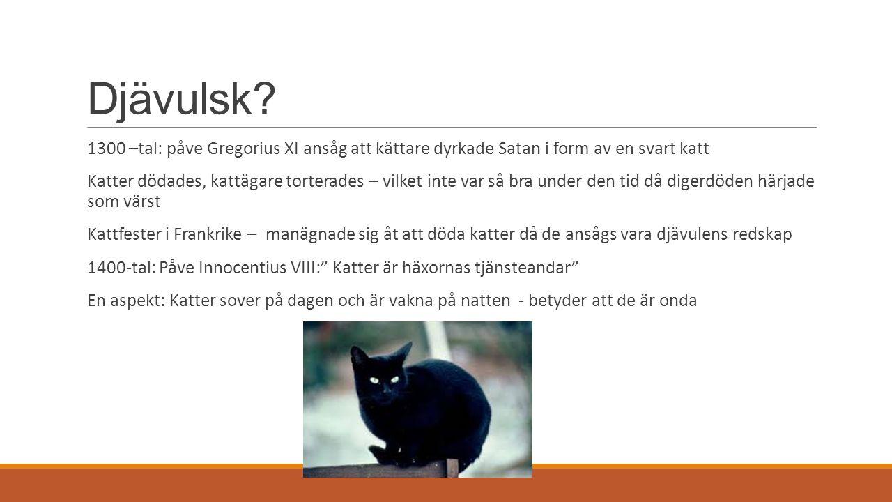 Djävulsk? 1300 –tal: påve Gregorius XI ansåg att kättare dyrkade Satan i form av en svart katt Katter dödades, kattägare torterades – vilket inte var