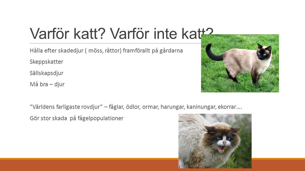 """Varför katt? Varför inte katt? Hålla efter skadedjur ( möss, råttor) framförallt på gårdarna Skeppskatter Sällskapsdjur Må bra – djur """"Världens farlig"""