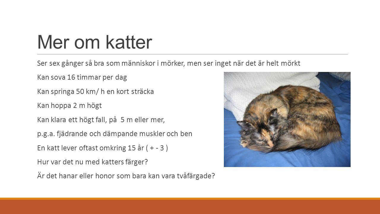 Mer om katter Ser sex gånger så bra som människor i mörker, men ser inget när det är helt mörkt Kan sova 16 timmar per dag Kan springa 50 km/ h en kort sträcka Kan hoppa 2 m högt Kan klara ett högt fall, på 5 m eller mer, p.g.a.