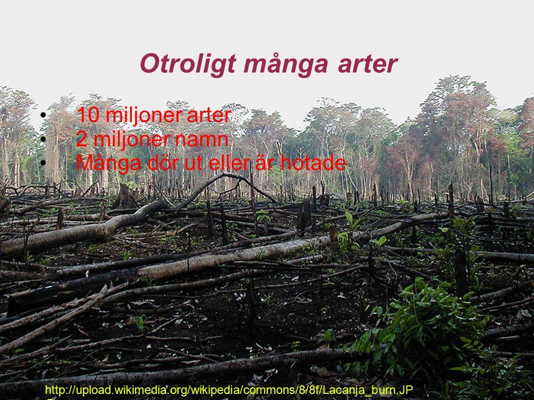 Otroligt många arter 10 miljoner arter 2 miljoner namn Många dör ut eller är hotade http://upload.wikimedia.org/wikipedia/commons/8/8f/Lacanja_burn.JP G