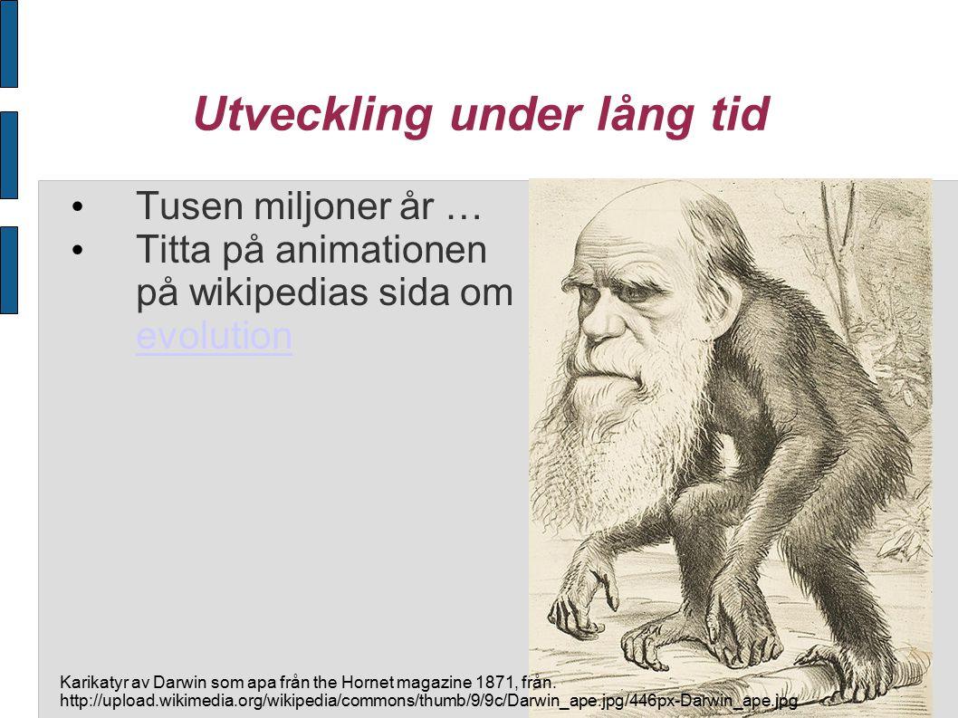 Utveckling under lång tid Tusen miljoner år … Titta på animationen på wikipedias sida om evolution evolution Karikatyr av Darwin som apa från the Hornet magazine 1871, från.
