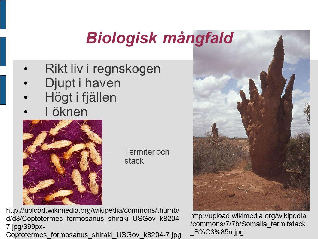 Biologisk mångfald Rikt liv i regnskogen Djupt i haven Högt i fjällen I öknen – Termiter och stack http://upload.wikimedia.org/wikipedia /commons/7/7b/Somalia_termitstack _B%C3%85n.jpg http://upload.wikimedia.org/wikipedia/commons/thumb/ d/d3/Coptotermes_formosanus_shiraki_USGov_k8204- 7.jpg/399px- Coptotermes_formosanus_shiraki_USGov_k8204-7.jpg