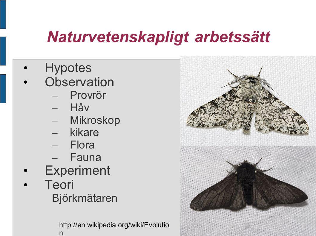 Naturvetenskapligt arbetssätt Hypotes Observation – Provrör – Håv – Mikroskop – kikare – Flora – Fauna Experiment Teori Björkmätaren http://en.wikipedia.org/wiki/Evolutio n