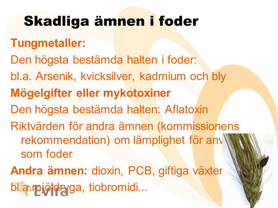 Skadliga ämnen i foder Tungmetaller: Den högsta bestämda halten i foder: bl.a.