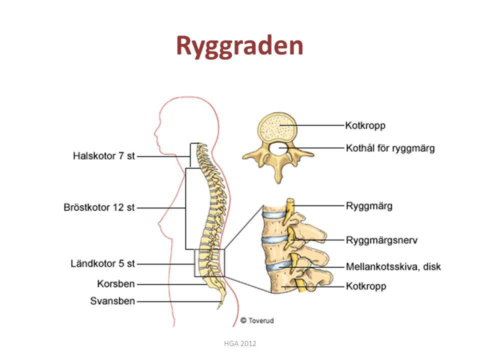 Ryggraden HGA 2012