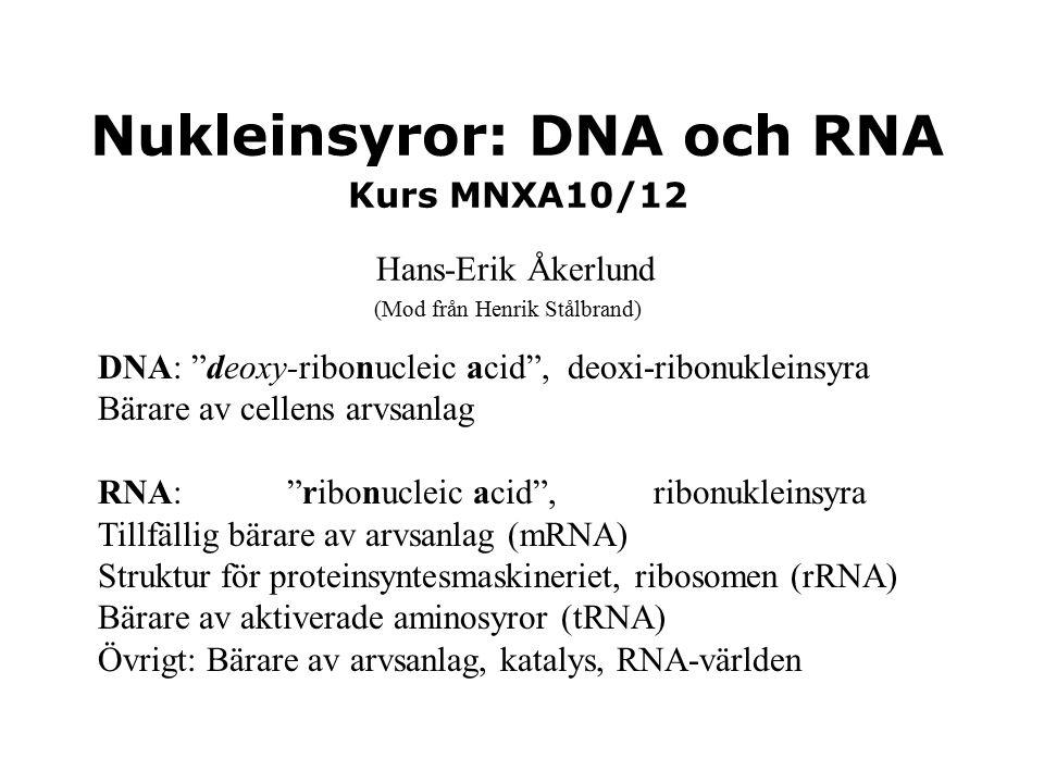 """Nukleinsyror: DNA och RNA Kurs MNXA10/12 Hans-Erik Åkerlund DNA: """"deoxy-ribonucleic acid"""", deoxi-ribonukleinsyra Bärare av cellens arvsanlag RNA: """"rib"""