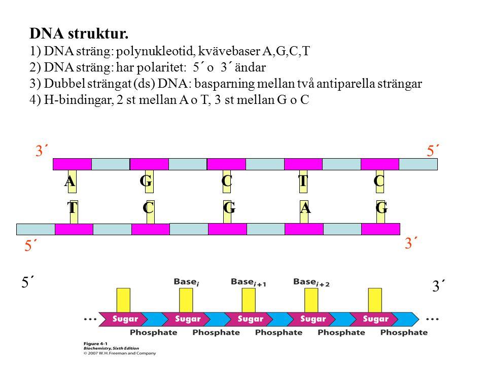 DNA struktur. 1) DNA sträng: polynukleotid, kvävebaser A,G,C,T 2) DNA sträng: har polaritet: 5´ o 3´ ändar 3) Dubbel strängat (ds) DNA: basparning mel