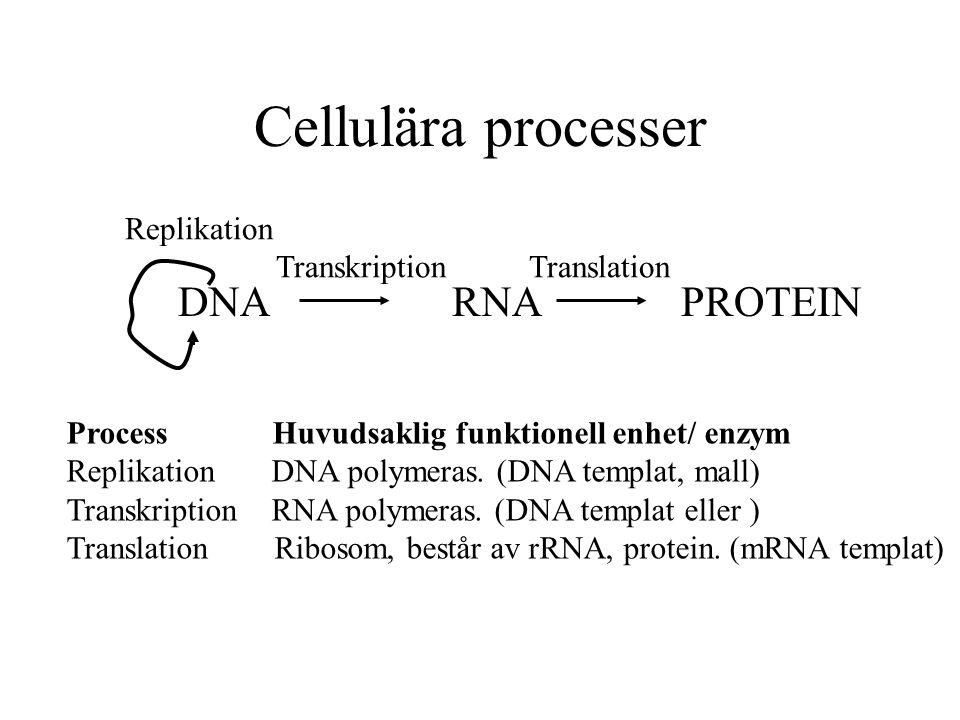 Cellulära processer DNA RNA PROTEIN Replikation Transkription Translation Process Huvudsaklig funktionell enhet/ enzym Replikation DNA polymeras. (DNA