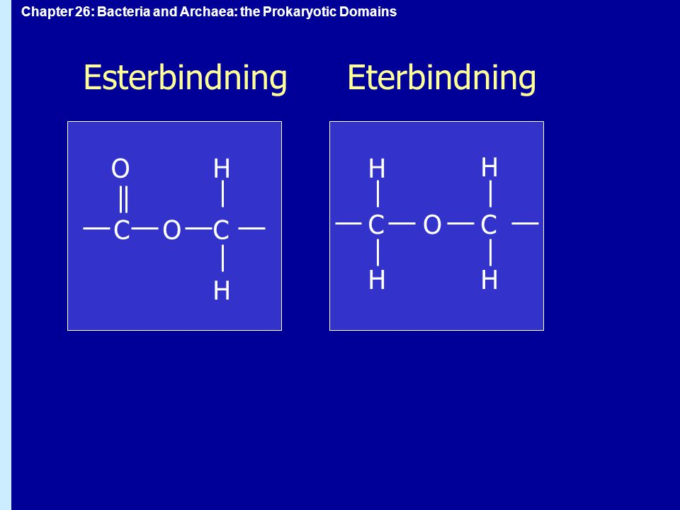 Chapter 26: Bacteria and Archaea: the Prokaryotic Domains EsterbindningEterbindning C CC O O O C H H H H H H