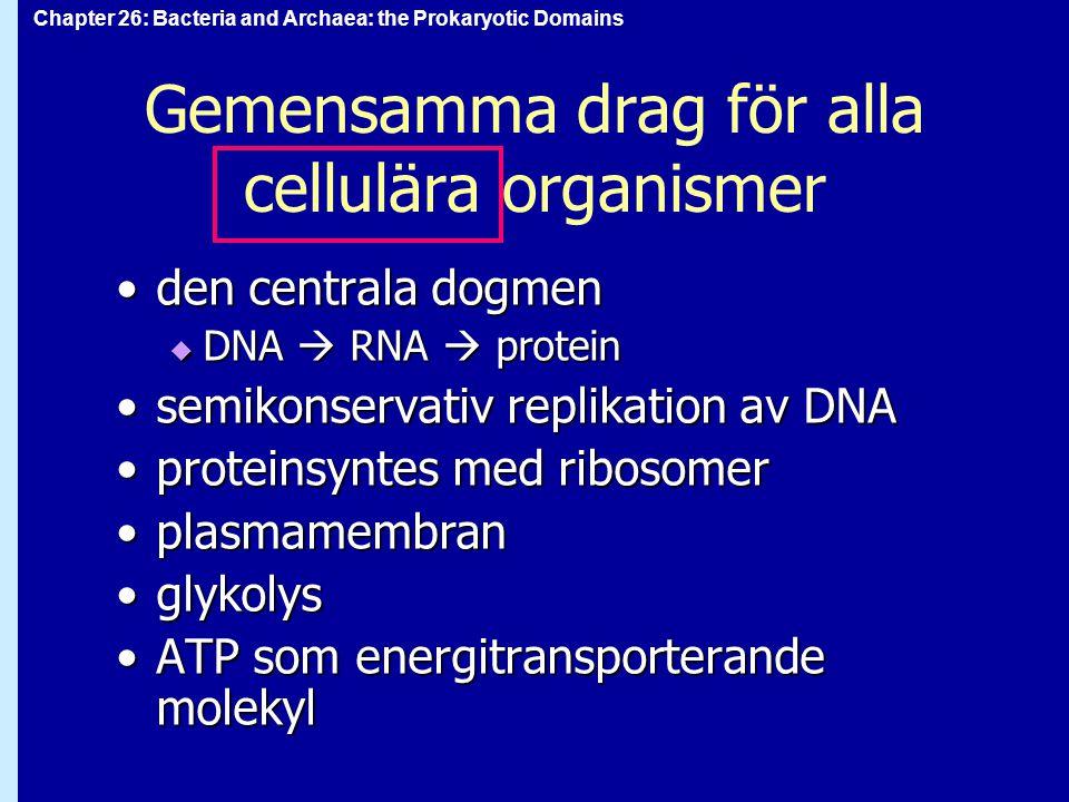 Chapter 26: Bacteria and Archaea: the Prokaryotic Domains Gemensamma drag för alla cellulära organismer den centrala dogmenden centrala dogmen  DNA 