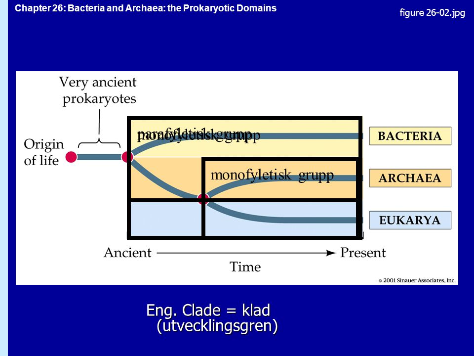 Chapter 26: Bacteria and Archaea: the Prokaryotic Domains Figure 26.2 Eng.