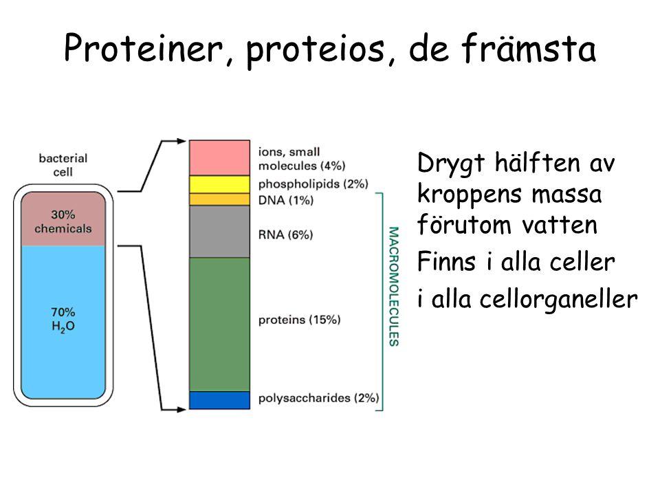 Proteiner, proteios, de främsta Drygt hälften av kroppens massa förutom vatten Finns i alla celler i alla cellorganeller