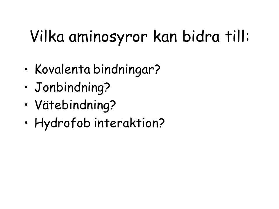 Vilka aminosyror kan bidra till: Kovalenta bindningar? Jonbindning? Vätebindning? Hydrofob interaktion?