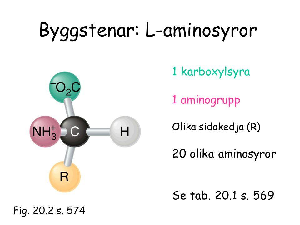 Byggstenar: L-aminosyror 1 karboxylsyra 1 aminogrupp Olika sidokedja (R) 20 olika aminosyror Se tab. 20.1 s. 569 Fig. 20.2 s. 574