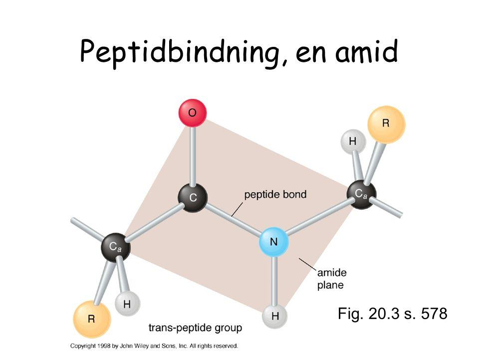 Peptidbindning, en amid Fig. 20.3 s. 578
