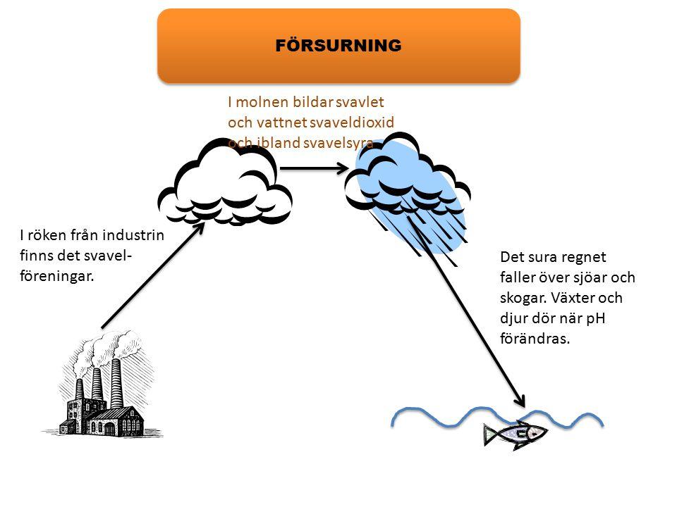 FÖRSURNING I röken från industrin finns det svavel- föreningar. I molnen bildar svavlet och vattnet svaveldioxid och ibland svavelsyra Det sura regnet