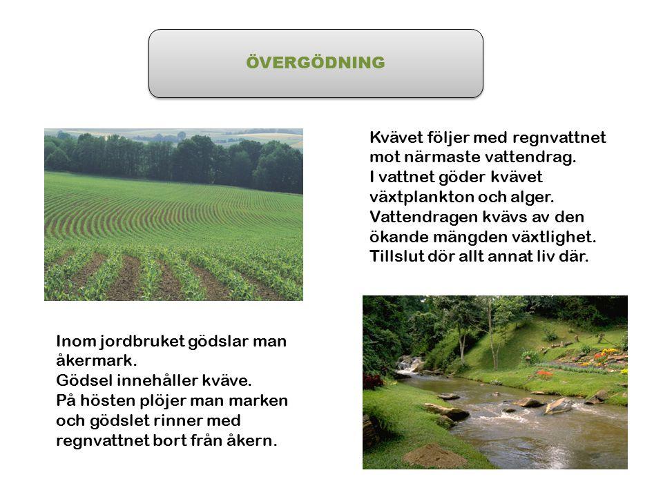 ÖVERGÖDNING Inom jordbruket gödslar man åkermark. Gödsel innehåller kväve. På hösten plöjer man marken och gödslet rinner med regnvattnet bort från åk