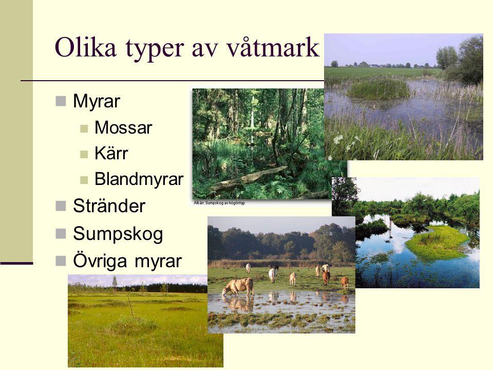 Olika typer av våtmark Myrar Mossar Kärr Blandmyrar Stränder Sumpskog Övriga myrar