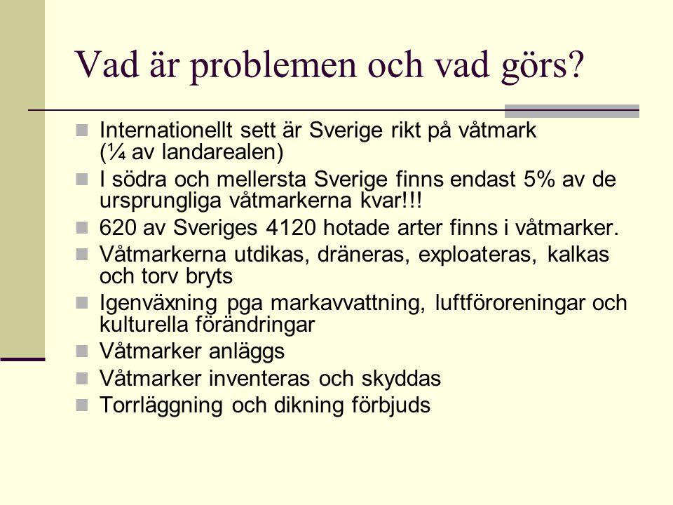 Vad är problemen och vad görs? Internationellt sett är Sverige rikt på våtmark (¼ av landarealen) I södra och mellersta Sverige finns endast 5% av de