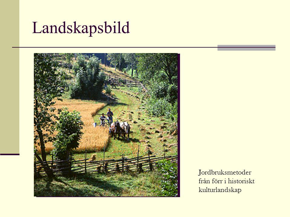 Landskapsbild Jordbruksmetoder från förr i historiskt kulturlandskap