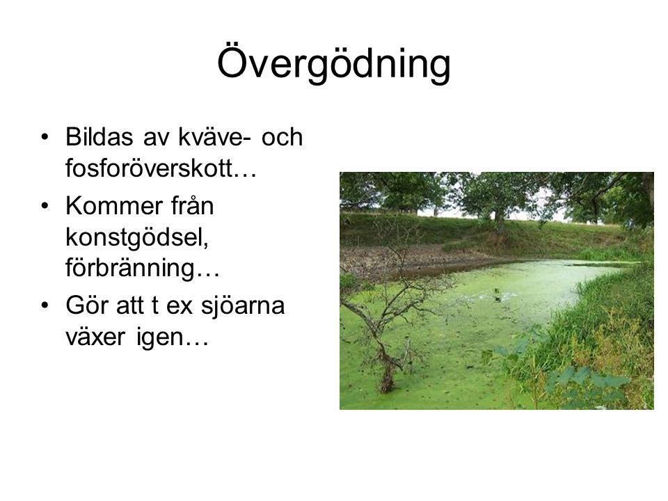 Övergödning Bildas av kväve- och fosforöverskott… Kommer från konstgödsel, förbränning… Gör att t ex sjöarna växer igen…