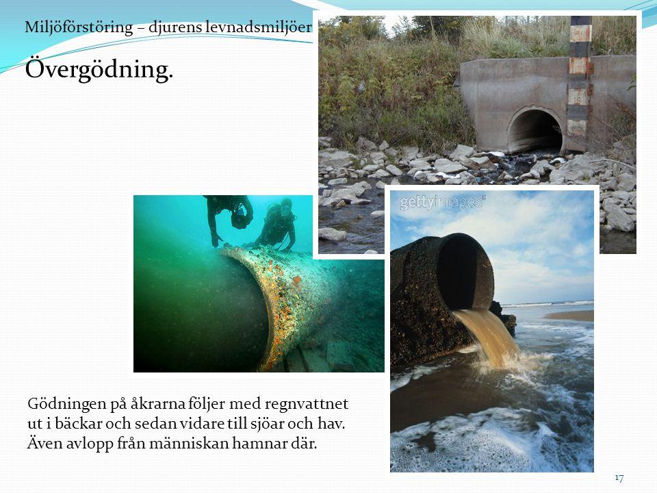 Miljöförstöring – djurens levnadsmiljöer försvinner. Övergödning. Gödningen på åkrarna följer med regnvattnet ut i bäckar och sedan vidare till sjöar