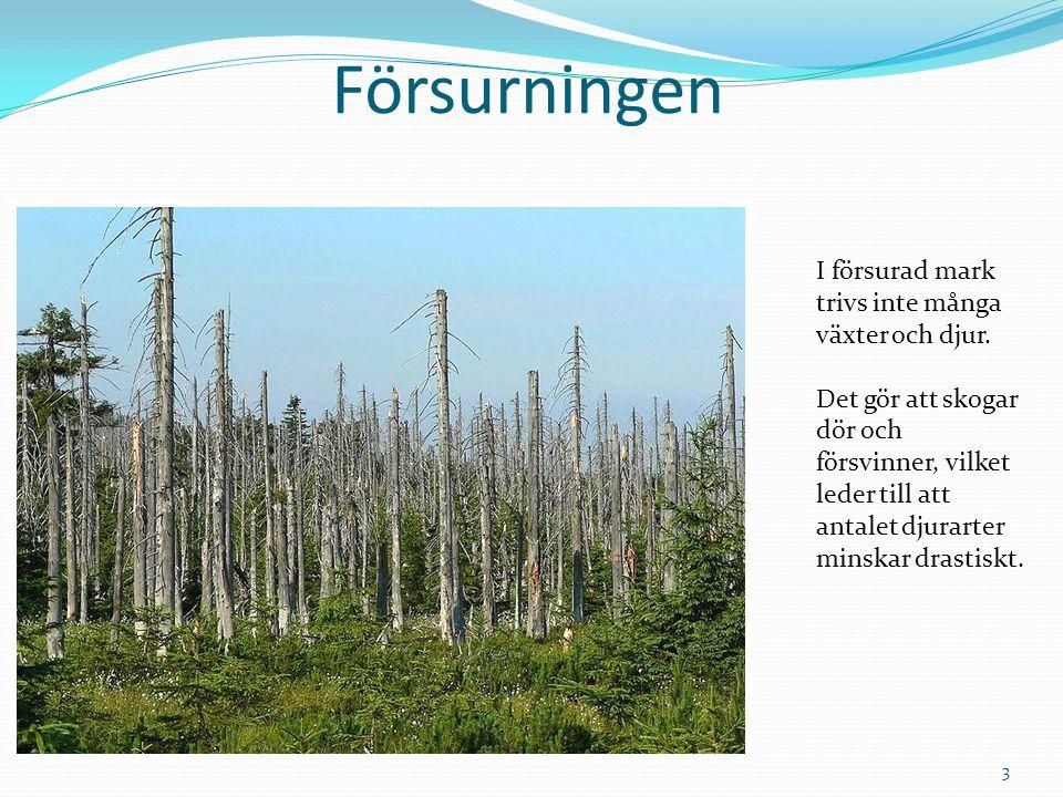 Försurningen I försurad mark trivs inte många växter och djur. Det gör att skogar dör och försvinner, vilket leder till att antalet djurarter minskar