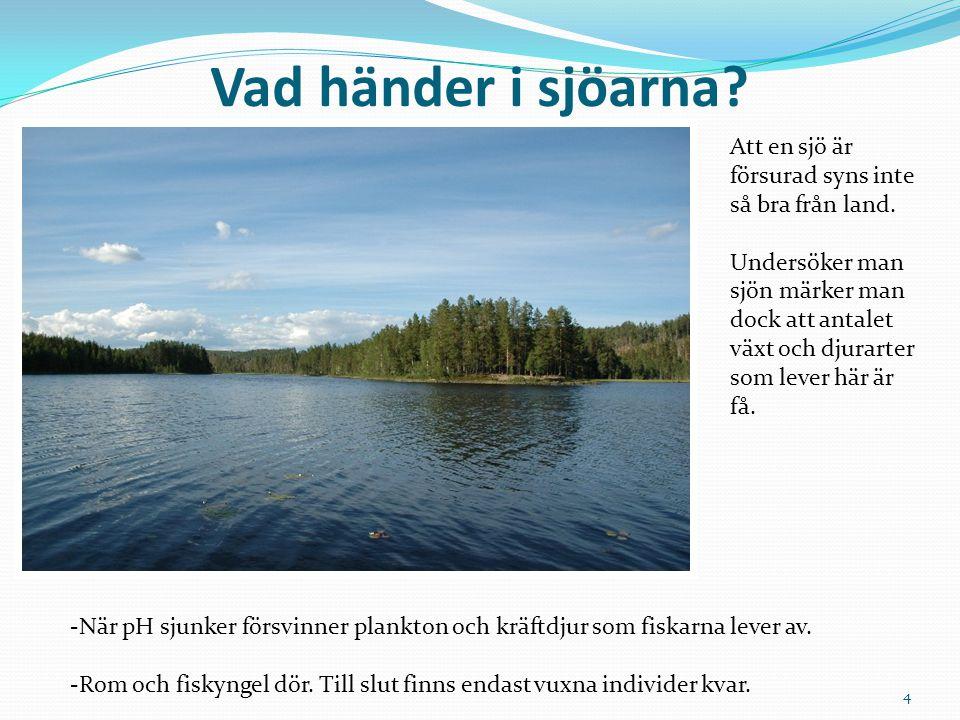 Vad händer i sjöarna? Att en sjö är försurad syns inte så bra från land. Undersöker man sjön märker man dock att antalet växt och djurarter som lever