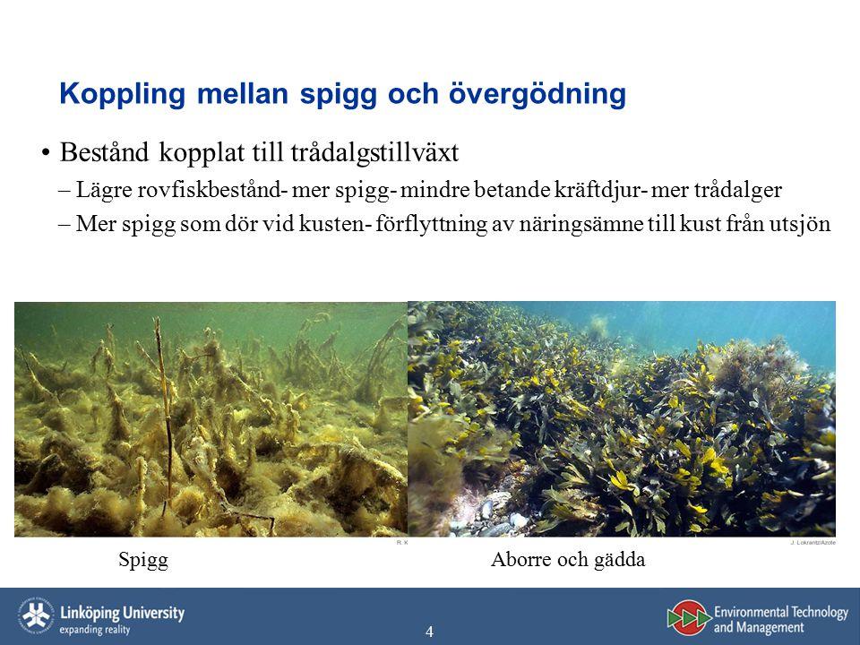 4 Koppling mellan spigg och övergödning Bestånd kopplat till trådalgstillväxt –Lägre rovfiskbestånd- mer spigg- mindre betande kräftdjur- mer trådalge