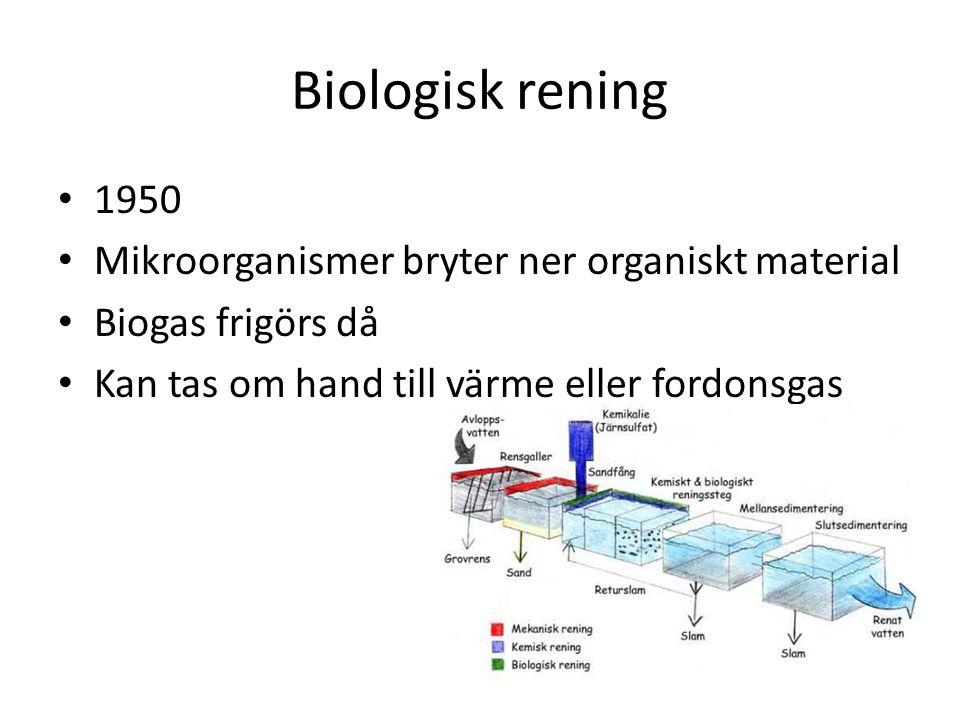 Biologisk rening 1950 Mikroorganismer bryter ner organiskt material Biogas frigörs då Kan tas om hand till värme eller fordonsgas