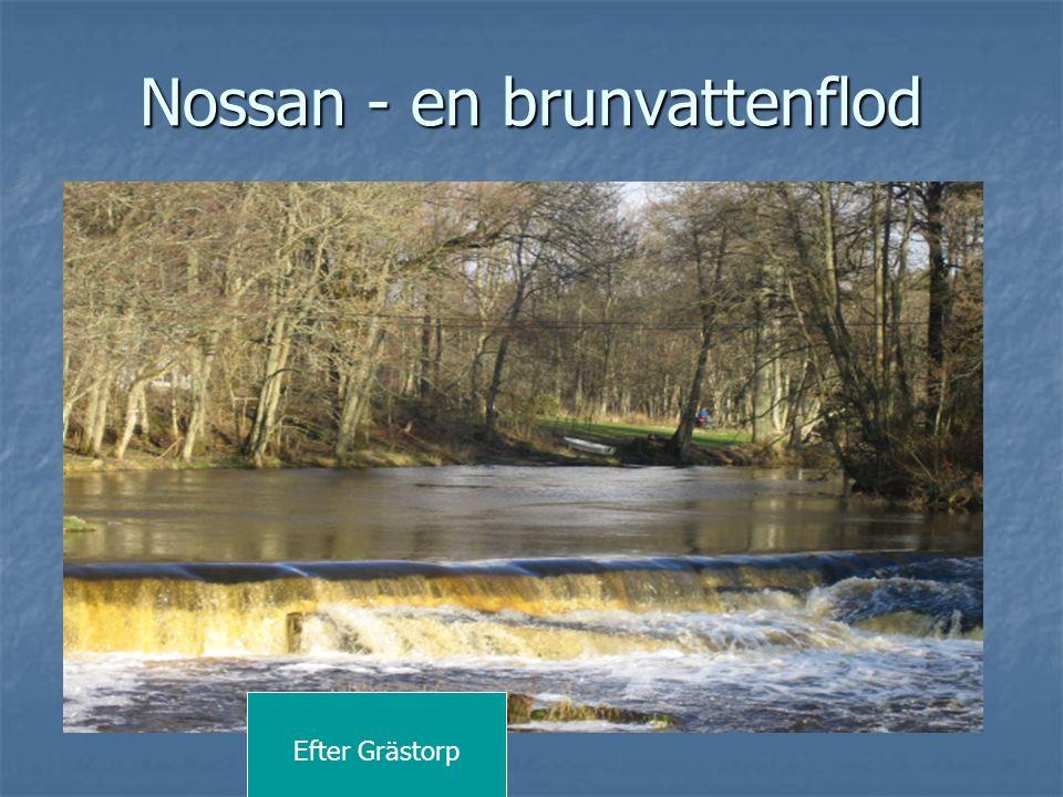 Nossan - en brunvattenflod Efter Grästorp
